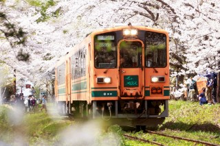 桜トレイン